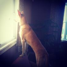 Kip at window