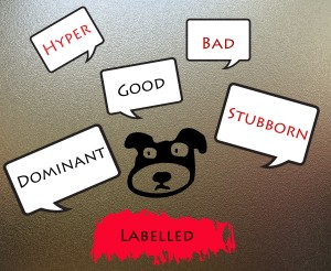 What is your dog's label?