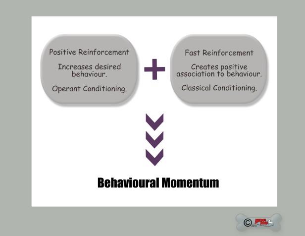 b momentum copy