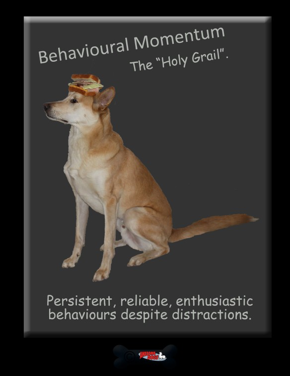 behavioural momentum copy